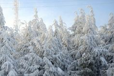 Snowy tree tops in Medea