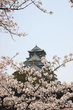 Osaka Castle and Cherry Blossoms Osaka Castle, Almond Blossom, Cherry Blossoms, Places, Flowers, Cherry Blossom, Japanese Cherry Blossoms, Royal Icing Flowers, Flower