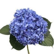Pink And Blue Flowers, Artwork, Fruit, Google Search, Work Of Art, Auguste Rodin Artwork, Artworks, Illustrators