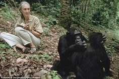 Jane Goodall offers sympathies over death of gorilla Harumbe to Cincinnati Zoo director | Daily Mail Online
