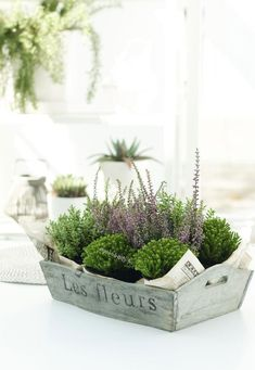 Like potted succulents that can be brought home and put in your garden or potted herbs. Don't want to throw away flowers for one time use!