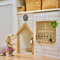 4LDKで、家族の、棚/カウンター下/DIY/かご/ペットスペース/ペットトイレについてのインテリア実例。 「イベント参加✳︎ ト...」 (2019-02-07 19:53:15に共有されました) Dog Potty, Cat Cave, Dog Rooms, Study Motivation, Shelves, Cool Stuff, House, Spoiled Rotten, Home Decor
