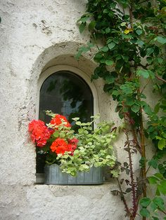 Geraniums with herbs! Lovely