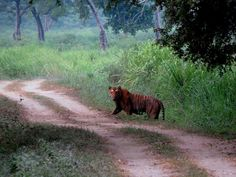 Kaziranga National Park Assam Northeast India. contact us if you want to experience the safari with is. www.neroutes.com