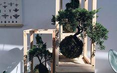Air Plants, as plantas que sobrevivem sem terra Garden Landscaping, Ladder Decor, Landscape, Plants, Home Decor, Mini Palm Tree, Tropical Plants, String Garden, Succulent Plants