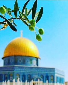 World's Most Beautiful, Beautiful Places, Places Around The World, Around The Worlds, Allah, Palestine Art, Fairy Wallpaper, Rare Historical Photos, Dome Of The Rock
