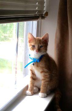 My Harvey - My First Little Man | VSPETS - Internet Pet Competition, Pet Photo Contest | Enter your pet at www.VSPETS.com