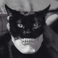 Find images and videos about black, cat and skull on We Heart It - the app to get lost in what you love. Funny Cats, Funny Animals, Cute Animals, Sneaky Animals, Crazy Cat Lady, Crazy Cats, Hate Cats, Skull Cat, Human Skull