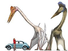 The quetzalcoatlus compared to a man, car, and pterodactyl.