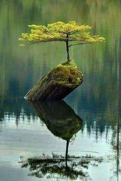 Nature always find away.