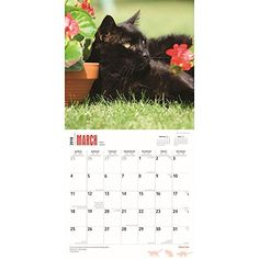 Buy your 2018 Black Cat calendar from Purrfect Gifts Online today! Cat Calendar, Cat Wall, Online Gifts, Cats, Black, Gatos, Kitty Cats, Black People, Cat Breeds