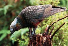 New Zealand Holidays, Forest Hill, Island Tour, Self Driving, Bird Watching, Beautiful Birds, Wonderful Places, Wildlife, Tours