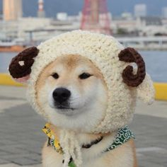 -Oh, humans. We hate them, but they love us. No logic. Shiba Inu, Cute Dogs And Puppies, I Love Dogs, Adorable Puppies, Doggies, Animals And Pets, Baby Animals, Japanese Dogs, Cute Funny Animals