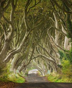 The Dark Hedges: Northern Ireland