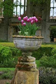 Old urn filled with tulips