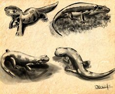 salamandras - Animales | Dibujando.net