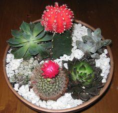 Creating a Dish Garden