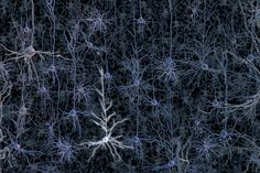 An activated neuron in a tangle of neurons.Thousands of research groups around the world are currently incorporating increasingly advanced techniques in optogenetics into studies of the brains of laboratory animals. Such studies are designed to reveal how healthy brains learn and create memories and to identify the neuronal bases of brain diseases and disorders such as Parkinson's disease, anxiety, schizophrenia, depression, strokes, pain, post-traumatic stress syndrome, drug addiction..