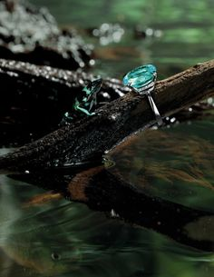 A Precious Empire. Photographed by Jonathan Knowles. Paraiba tourmaline ring 20cts by H Stern.
