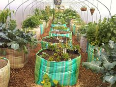 Colourful 1 ton grow bags for use as raised beds in this under cover allotment, with each plot belonging to a different gardener :-) Garden Shop, Indoor Garden, Vegetable Garden, Outdoor Gardens, Veggie Gardens, Allotment Gardening, Permaculture Garden, Tiny Farm, Greenhouse Gardening