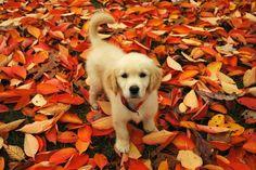 Roxy as a puppy - Imgur