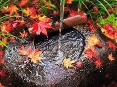 Resultado de imagen para hojas con agua
