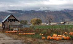 Gorgeous pumpkin farm <3