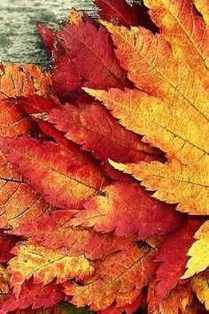 beautiful fall leaves