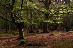 Image result for mallard wood new forest