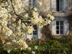 a spring in my step - MY FRENCH COUNTRY HOME