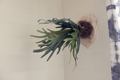 This fern staghorn is a funny take on the faux taxidermy look in the nursery!