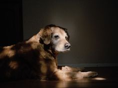 Orion from Vacaville, CA. Photo Series Captures The Quiet Dignity Of Search And Rescue Dogs That Served During 9/11
