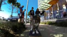 VIEWS: Over 6 MILLION!! World's BEST Skateboarding CAT! Go Didga! The Action starts when Ollie, a skateboard, takes his friend Didga, a CAT, for a ride aroun...
