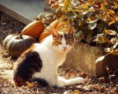 Co zagraża kotu wychodzącemu?