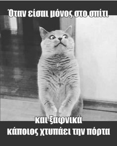 #greek_funny_quotes #edita Greek Memes, Funny Greek Quotes, Funny Texts, Funny Jokes, Hilarious, Happy Animals, Funny Animals, Funny Images, Funny Photos