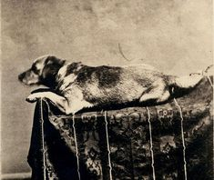 President Abraham Lincoln's dog Fido professionally photographed by  F.W. Ingmire, Springfield, IL, 1860.  Lincoln was devoted to his dog.