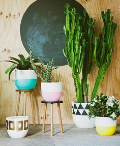 houseplants ideas (5)