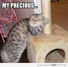 My Precious! - Funny cat hugging the pole like Gollum from The Lord of the Rings.