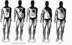 a48dd08845 male-body-shapes.jpg (800×499) Male Body Shapes