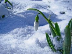 Spring is coming! 8 Martie, Winter Flowers, Spring Is Coming, Water, Animals, Outdoor, Image, Winter Wonderland, Roses