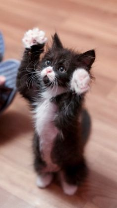 Please pick me up & give me a cuddle