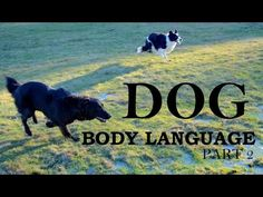 Understanding Dog Body Language Part 1 https://www.youtube.com/watch?v=8bg_gGguwzg Thank-you to all the people who donated video clips so this video can have...