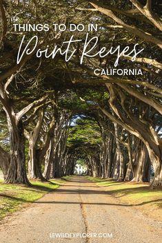 California Coast, California Travel, Northern California, Cypress Tree Tunnel, Cypress Trees, Point Reyes Station, South America Travel, North America, Stuff To Do
