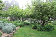 Food forest garden in NSW