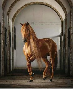 Gotan - an amazing Lusitano stallion owned and trained by Clemence Faivre. This horse is a real artist! Photographed in beautiful old stables in heart of Andalusia, Spain. Cute Horses, Pretty Horses, Horse Love, Beautiful Horses, Animals Beautiful, Funny Horses, Animals And Pets, Cute Animals, Majestic Horse