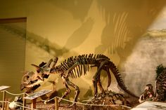 Wyoming Dinosaur Center &  dig sites for a  taste of the pre-historic past with this virtual museum tour