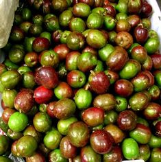 Sinigwelas (Spanish Plum) It does taste like plum but it has less flesh and more seed.