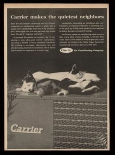 """1962 sleeping cat & kittens photo Carrier air conditioning unit print ad This is an original 1962 print ad for Carrier air conditioning! It measures approximately 11"""" x 8"""" overall,"""