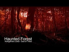 Haunted Forest - Aokigahara Jukai Suicide Forest (The Paranormal Guide) - YouTube