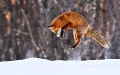 Jasper Doest Photography - Arctic wilderness
